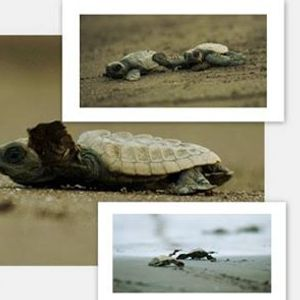 TMI Turtle Festival Tour to Anjarle On 6th-7th April19.