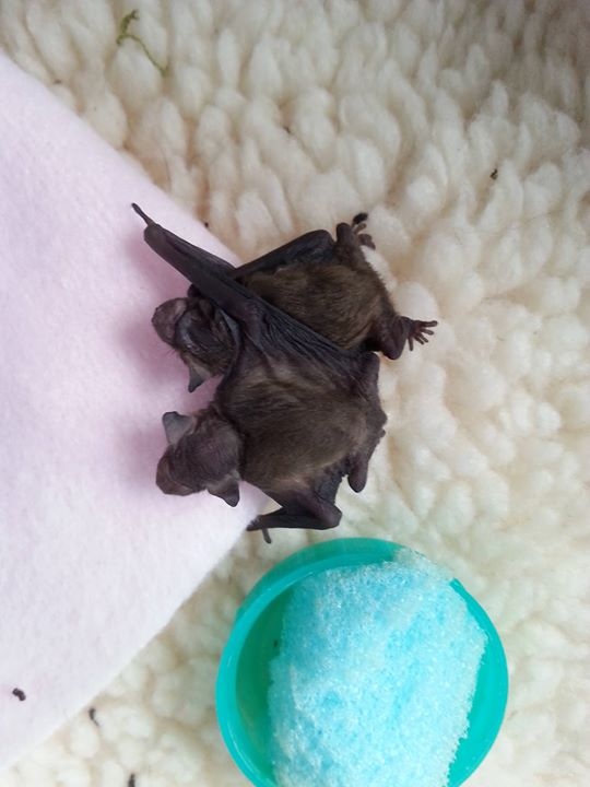 Bat Care Catch Up Day