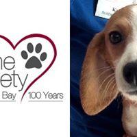 Dog Adoption Events Tampa Bay