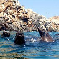 Islas Palomino A nadar con los lobos marinos
