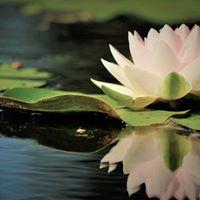 Mindfulness a Follonica - Presentazione del percorso