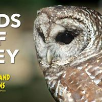 The Birds of Prey Show Inside Cumberland Caverns