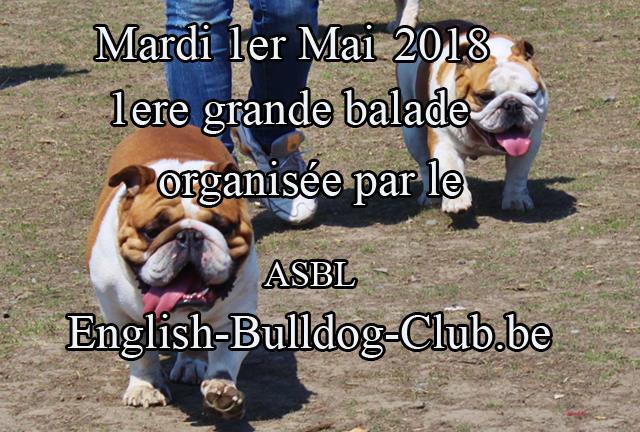 1 Ere Balade Bulldog Anglais At Place De La Gare 1367 Ramillies