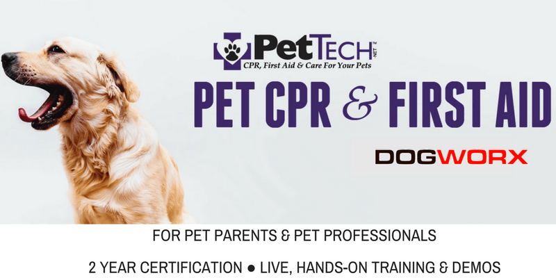 Pet Cpr First Aid Course Certificate At Sandy Paws Pet Salon