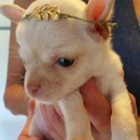 Meet and Greet Kentwood Pet Supplies Plus