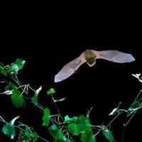 Bats Alive
