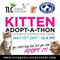 Kitten Adopt-a-thon in Tecumseh Laser Centre