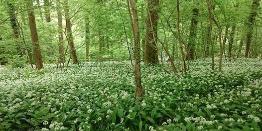 Forest Bathing - Wanders for well-being - Spring strolls