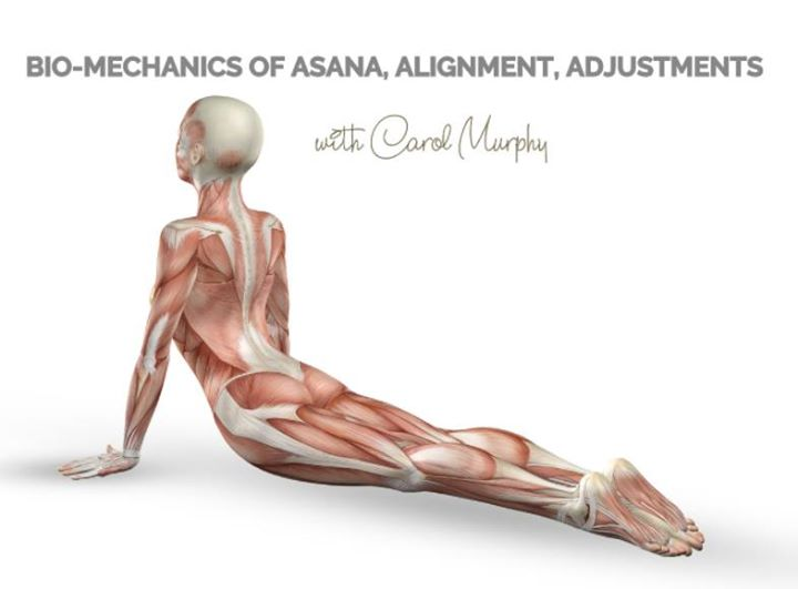 Advanced Yoga Anatomy 1 with Carol Murphy at Yoga Loft Cork, Cork