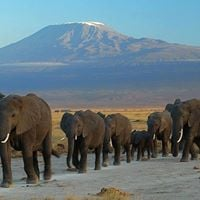 2 days Amboseli National Park Game drive ksh 3900