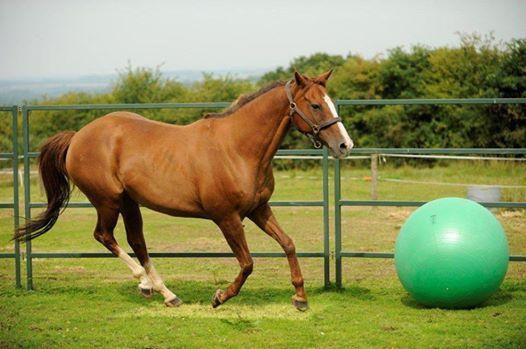 Horse Agility Clinic