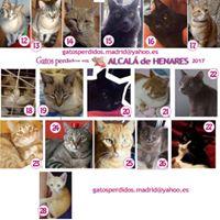 Alcal de Henares gatos perdidos
