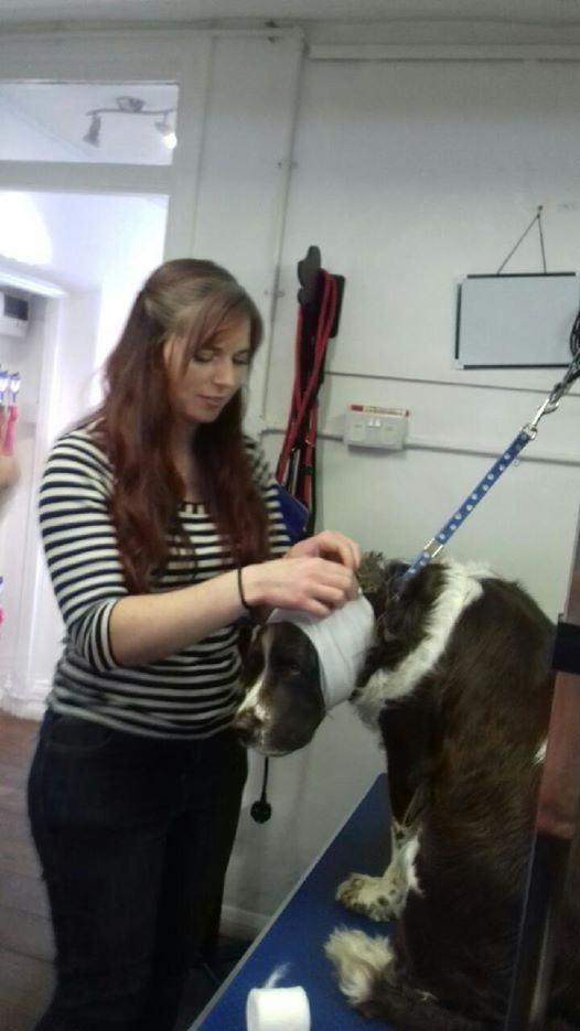 Heavenlyz L3 Pet First Aid for Pet Care Professionals