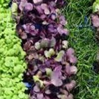 Farm Crew Microgreen Growing Workshop