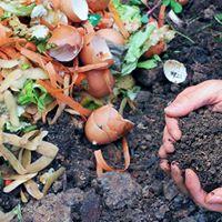 Atelier - Amendements organiques engrais verts compost