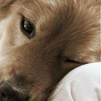 Introductieworkshop Coachen met Honden