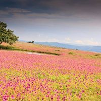 Kaas Flower Plateau Valley