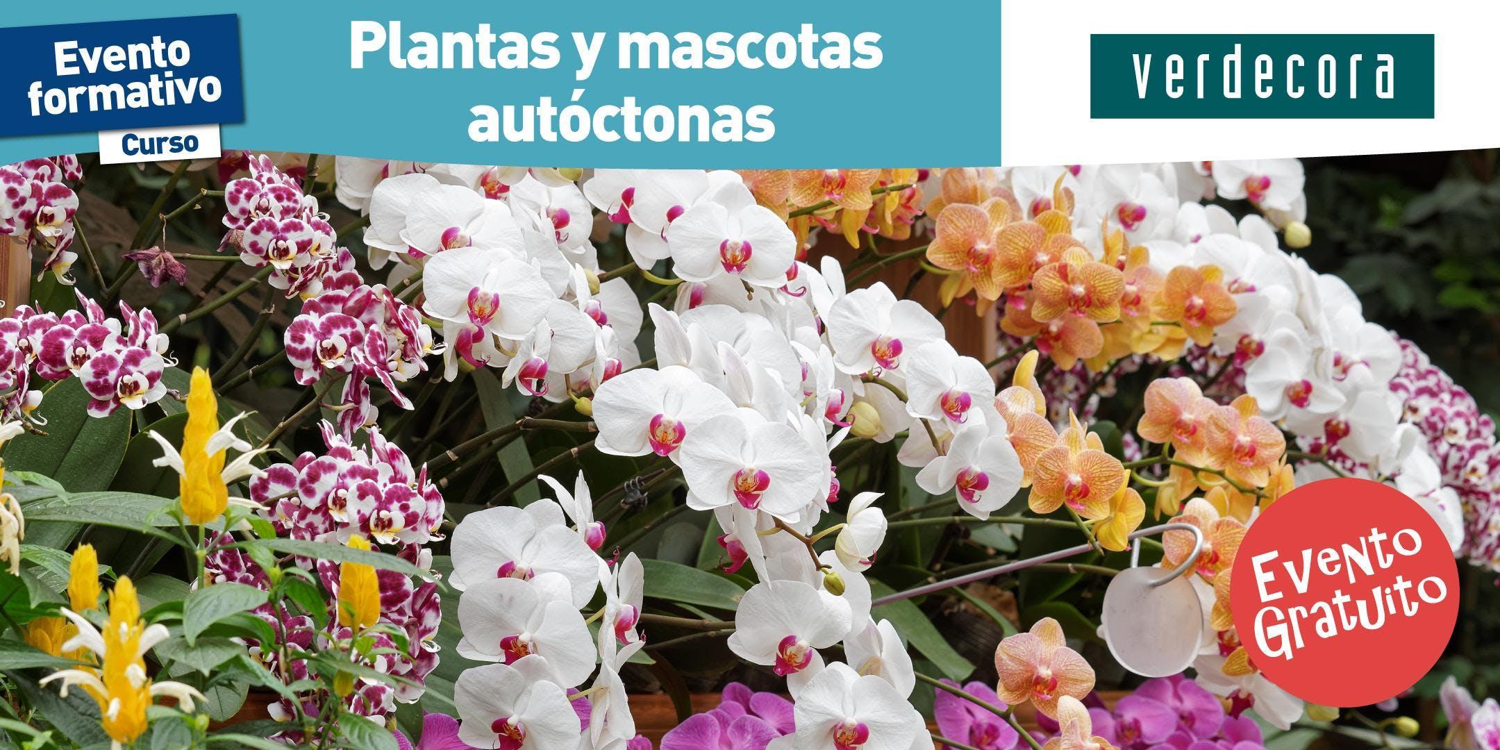 19 05 taller de plantas y mascotas aut ctonas verdecora for Verdecora malaga
