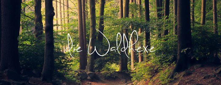 Ausgebucht Meditativer Waldspaziergang im Hohenstein- Witten