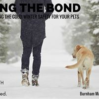 Building The Bond February Talk Winter Safety For Our Pets