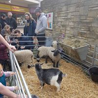 Free Animal Petting Farm at the Piazza Centre
