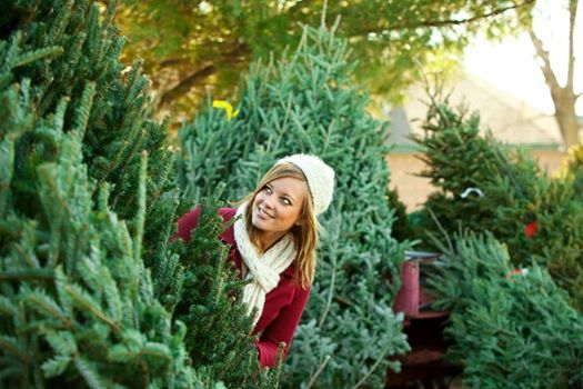 Opening day for cut your own Xmas tree. Starts 1st December