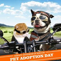 Pet Adoption Day  Harley Davidson