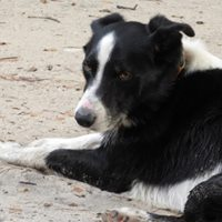 Myrtle Beach Kennel Club