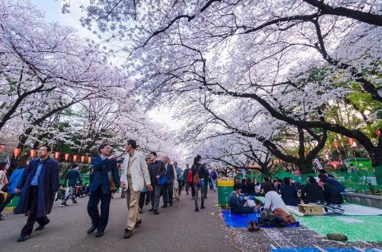 Philadelphia Cherry Blossom Festival 2020.Japan Spring Cherry Blossom Tour 2020 Fundraiser Online