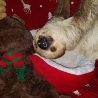 Photo with Santa Sloth &amp Friends