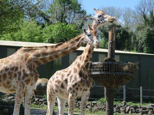 Year 3 Paignton Zoo Trip