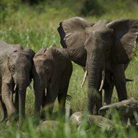 Red Chilli Murchison Falls 3 Day Big 6 Safari at 530