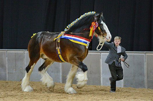National Shire Horse Show