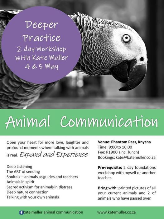 Knysna Workshop - Animal Communication Deeper Practice