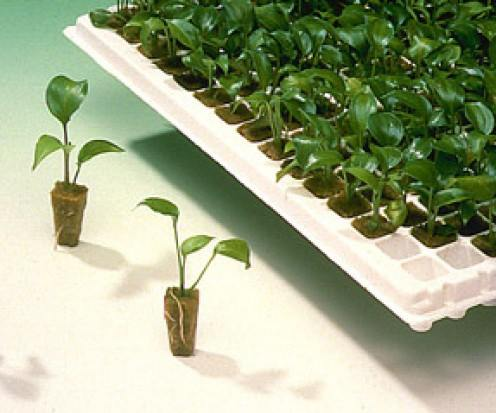 Propagation and cloning at basin indoor gardening klamath falls propagation and cloning workwithnaturefo