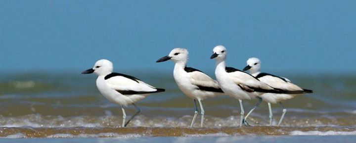 Guided Birding & Photography Tour  Jamnagar