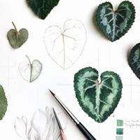 Art Science &amp Beauty Of Nature Plant Taxonomy &amp Art