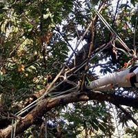 Tree Climbing - Corso certificato