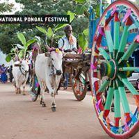 International Pongal Festival