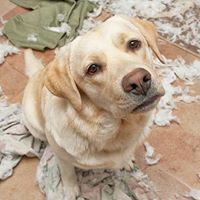 Canine Behaviour 102 - Separation Anxiety