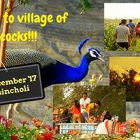 Morachi chincholi  A Rural trail to Village of Peacock