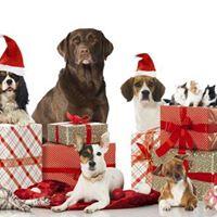 Limerick Animal Welfare Christmas Fair