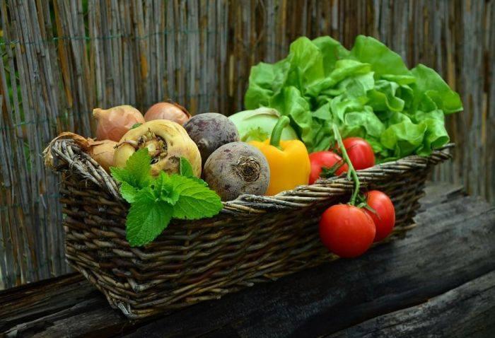 Cration dun jardin en permaculture