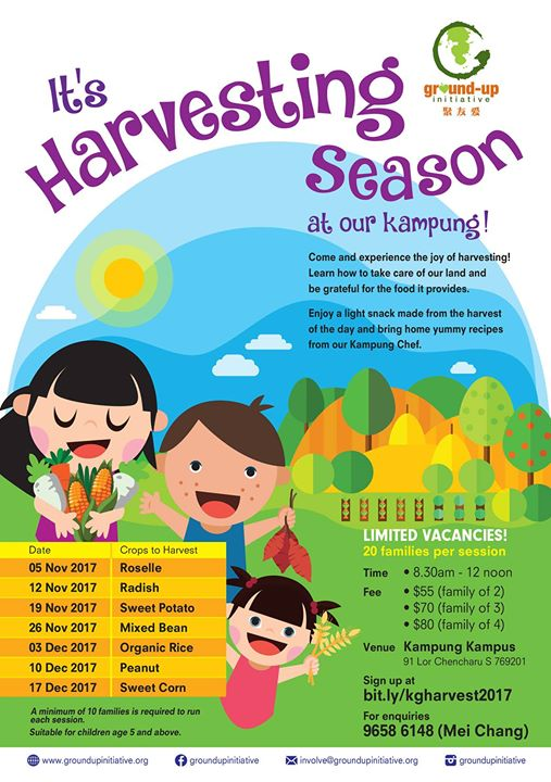 Harvesting Season is here at Kampung Kampus