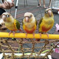 Parrots &amp Parronts Sharing Session &amp Gathering