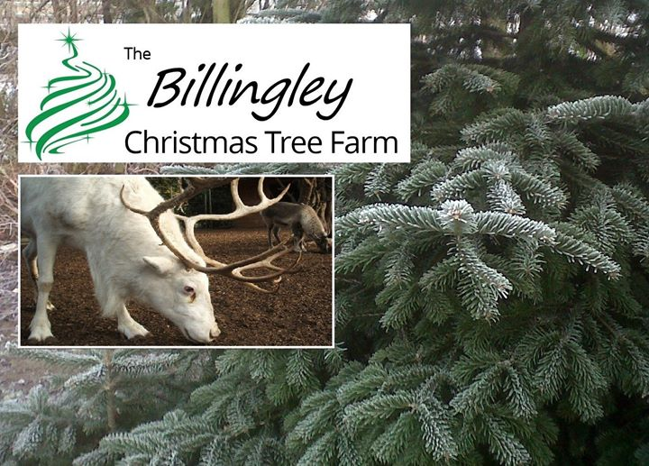 Billingley Christmas Tree Farm - Opens 19th November - Billingley Christmas Tree Farm - Opens 19th November Barnsley