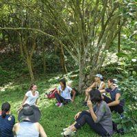 Https Shinrin Yoku Walks Com Nature Connection Activities