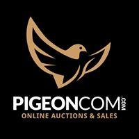 Pigeoncom Open Dag