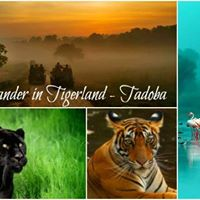 Wander in Tigerland - Tadoba (Women Wanderers Only)