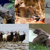 Mammal Identification Weekend - Malham Tarn